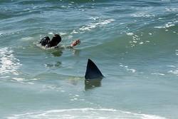 Акула в Австралии откусила ноги японскому туристу