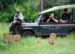 Туристическое агентство «Acacia» приглашает в бесплатный сафари-тур
