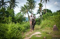 Слон в Таиланде убил погонщика и сбежал в джунгли с туристами на спине