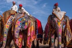 Индия может стать безвизовой для организованных туристов из России
