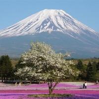 Допуск туристов на гору Фудзи в Японии ограничат