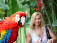 Бали. Парк птиц и рептилий.