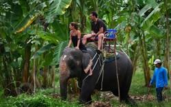 Катание на слонах в Индии могут запретить
