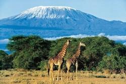 Ростуризм советует туристам покупать в Танзании только лицензированные сувениры