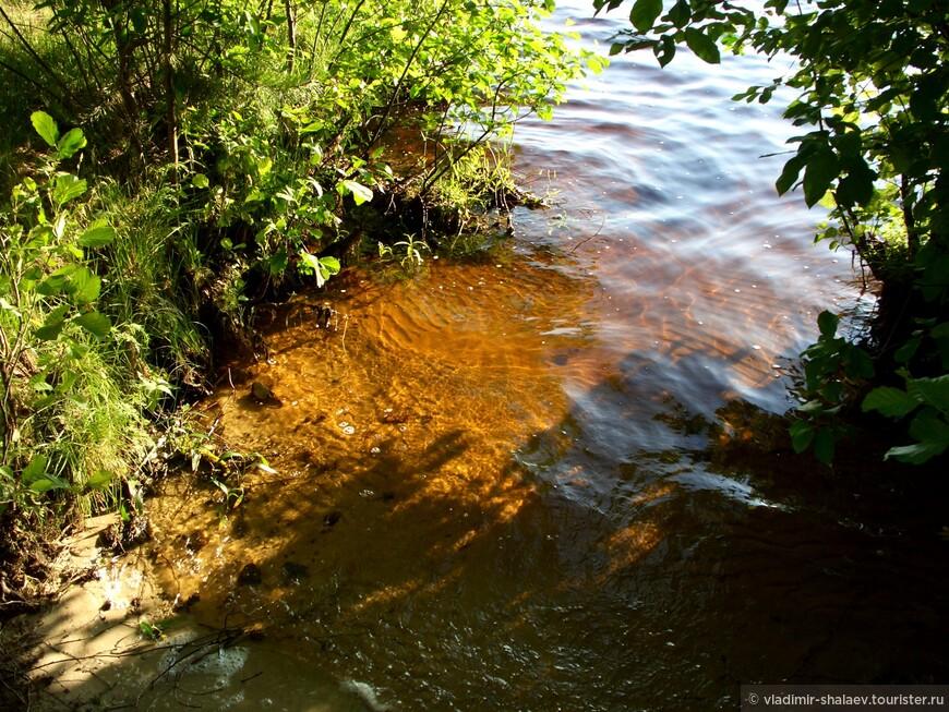 Вода из-за большого количества торфа имеет специфический коричневый оттенок и на ощупь кажется жирной и скользкой.