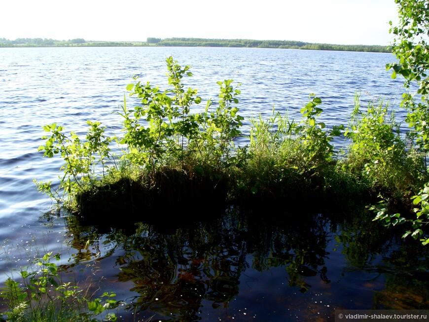 """В настоящее время участки сплавин отрываются от берега и образуют плавающие острова, которые иногда покрыты кустарниками и деревьями. Вот и этот """"островок"""" скоро отправится в плавание.В озере водятся налим, сом, окунь, щука, карась."""