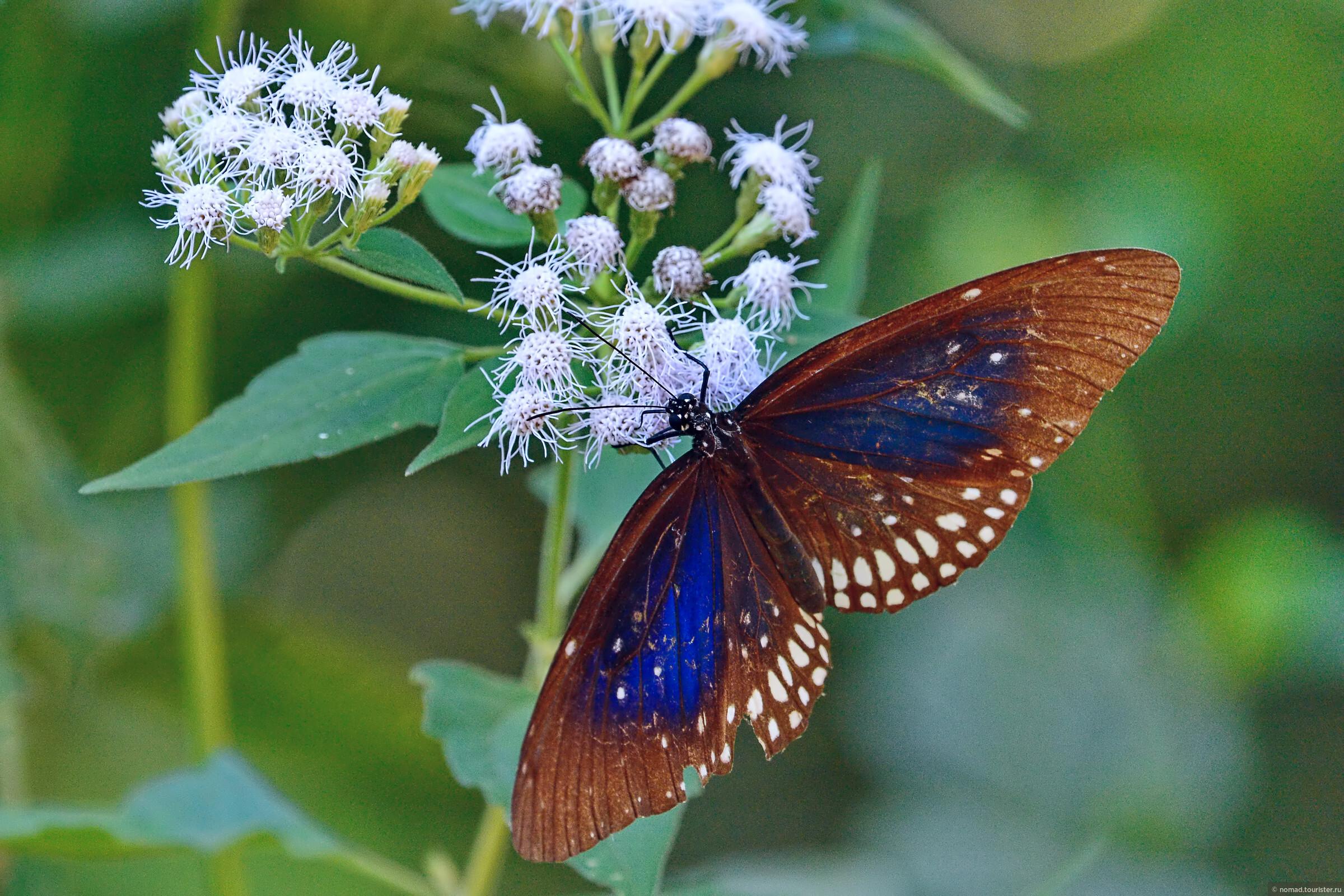 снял шикарную ночную бабочку