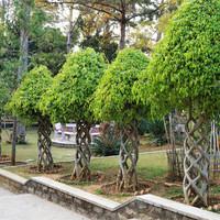 А 22 гектара территории монастыря отведены под очень ухоженные парки, пруды. Даже не верится, что мы находимся на территории Вьетнама.