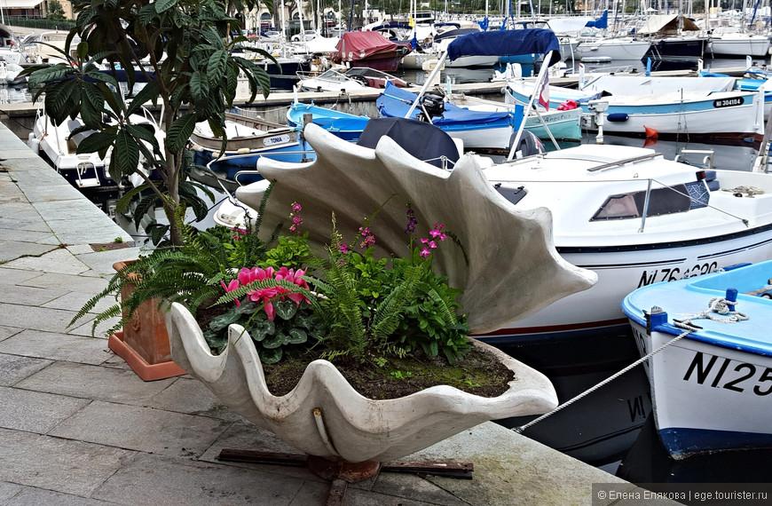 Цветы в порту