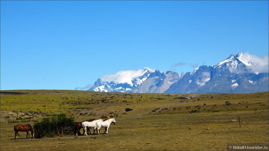 На подступах к парку. Повсюду можно видеть лошадок, овечек, коровок.