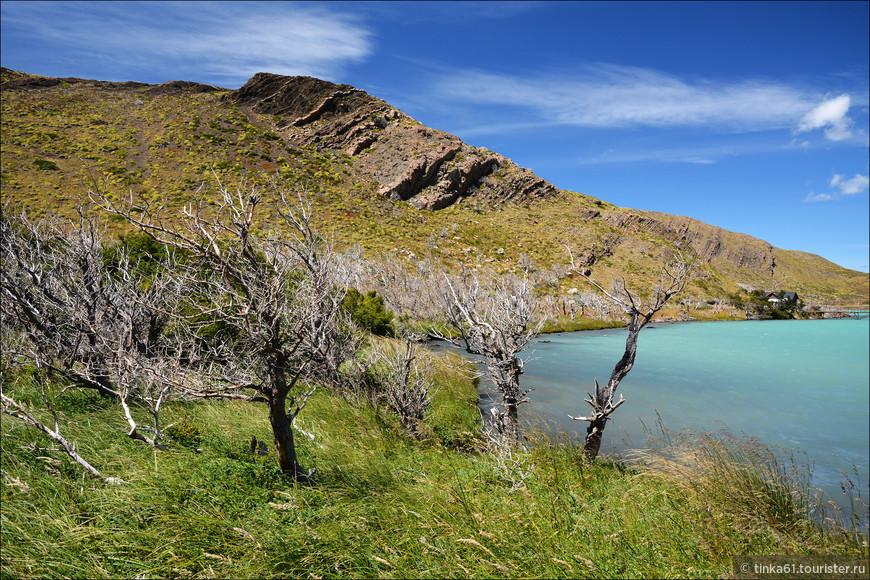 Сухие патагонские деревья - одна из фишек всей Патагонии и парка в частности.