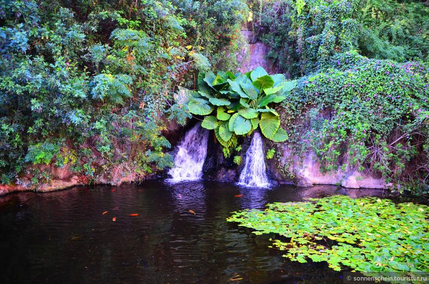 На территории Лоро парка обитают 3000 видов различных животных и 500 их подвидов.