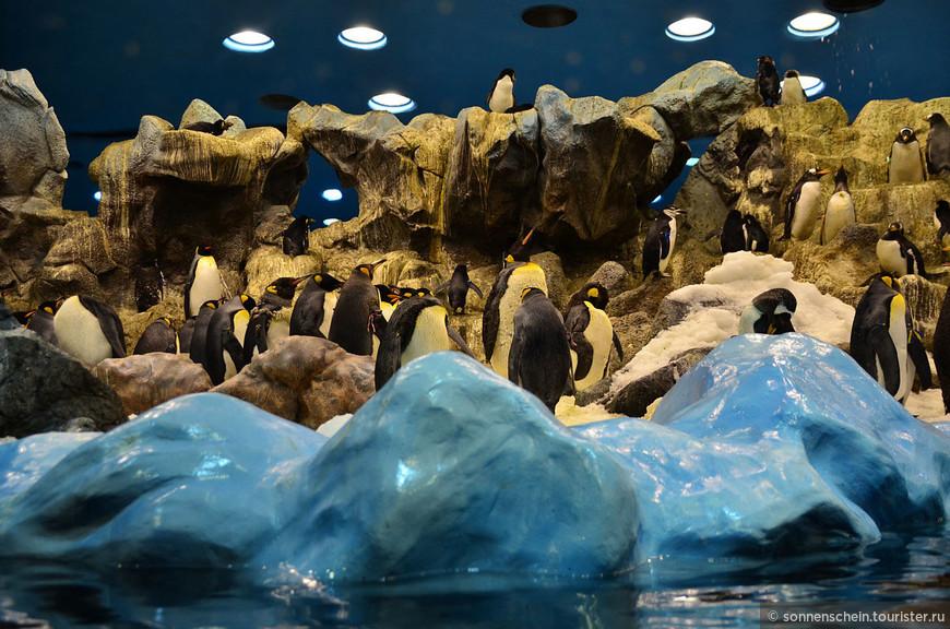 Пингвинарий Лоро парка — один из крупнейших в мире. И уж точно лучший в Европе. Пингвины по ту сторону стекла абсолютно уверены, что это и есть настоящая Антарктида. Пушка, как на горнолыжных курортах, ежедневно обеспечивает им 12 тонн снега, а рыбы съедают так вообще неприличное количество. Сверху постоянно сыпется снежок.Пингвинов берегут не меньше, чем обезьян. В павильоне запрещено делать фотографии со вспышкой, чтобы не беспокоить подопечных холодной зоны  парка.