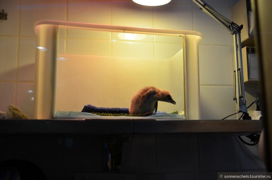 """В далёком 1998 году прибыли первые яйца Королевского пингвина. В 1999 году открылась """"Планета Пингвин"""" Габриэлой фон Гумбольт, потомком знаменитого исследователя Александра Гумбольта."""