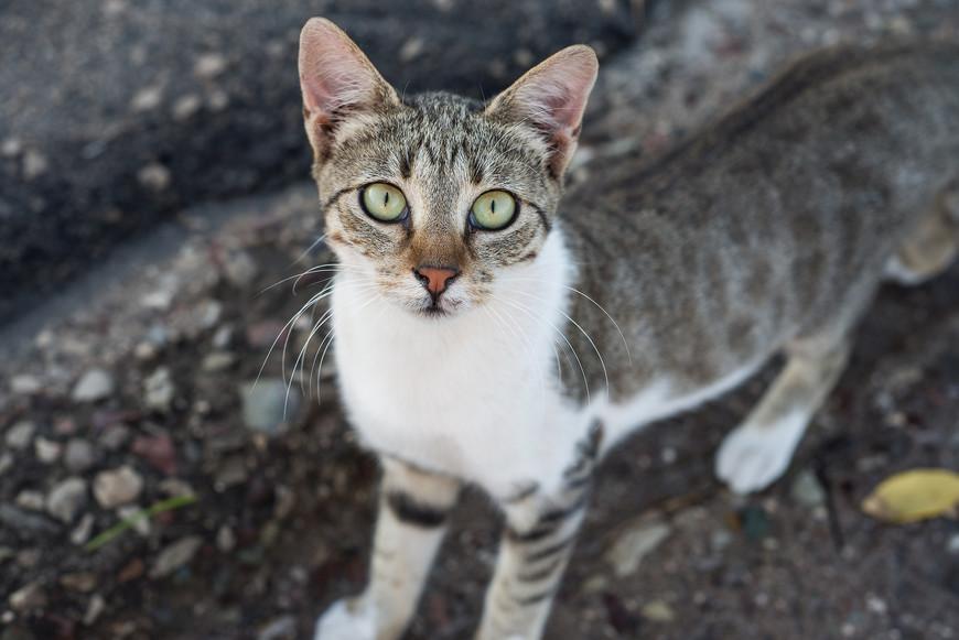 Количество  котов в  Греции  зашкаливает )) встречаются везде,  разве ток на пляже ни лежат ни  загорают. А у  этого  такой  чистый, любящий взгляд )))