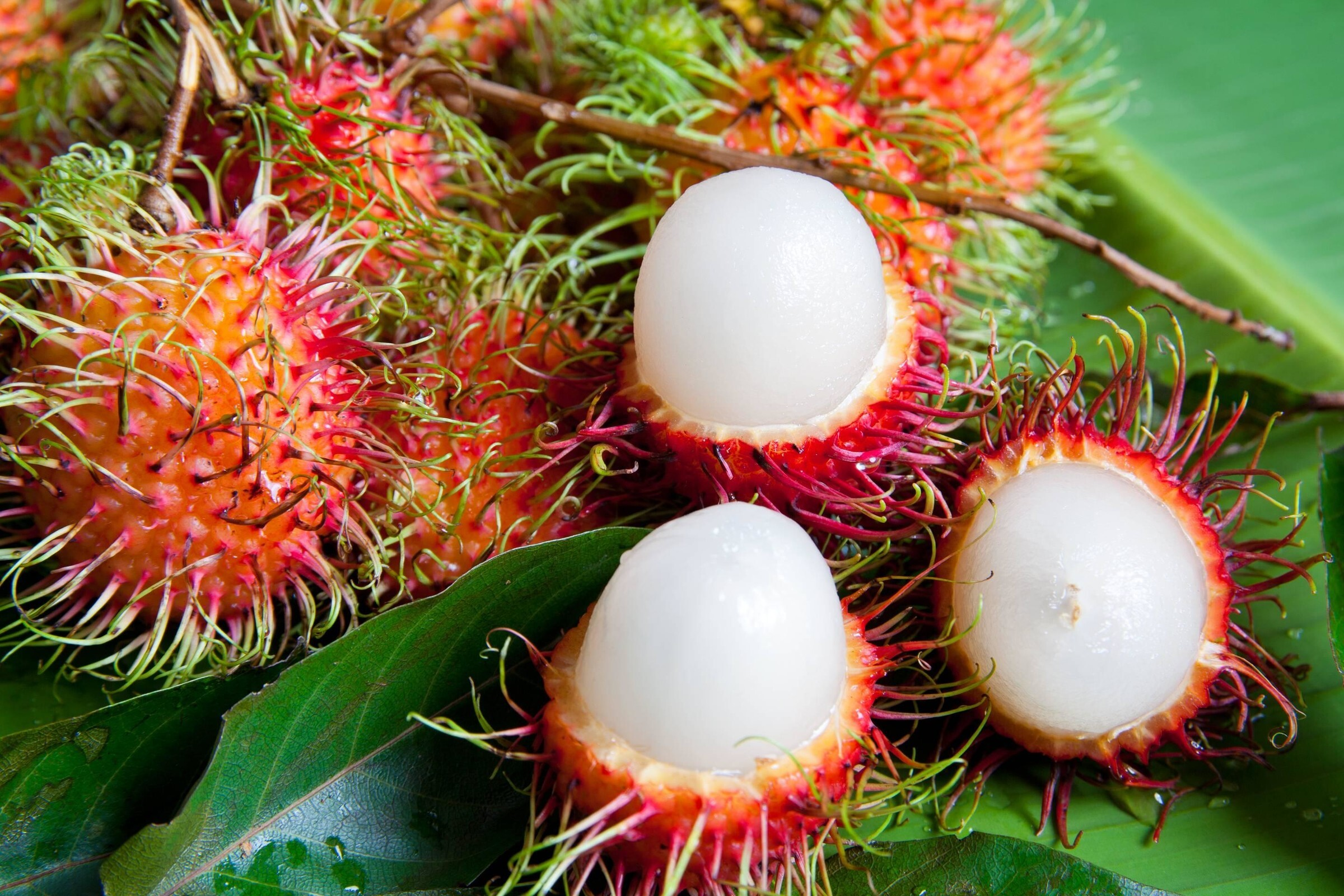 Обои напиток, стол, фрукты, цветы, фрукт дракона, апельсин, арбуз. Еда foto 18