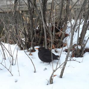 Карловы Вары в марте или город под снегом