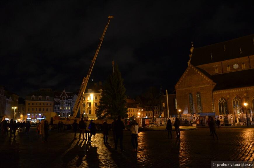 На площади Домского собора устанавливают Рождественскую ель.