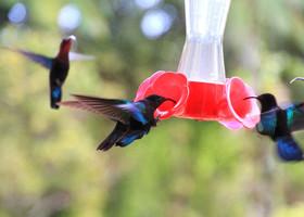 Только природа и выдает секрет - вы не во Франции, вы гораздо дальше... И шустрые колибри порхают с французским акцентом.