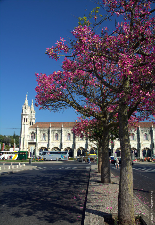 Удивительно, но в начале сентября  эти розовые деревья создавали ощущение весны.