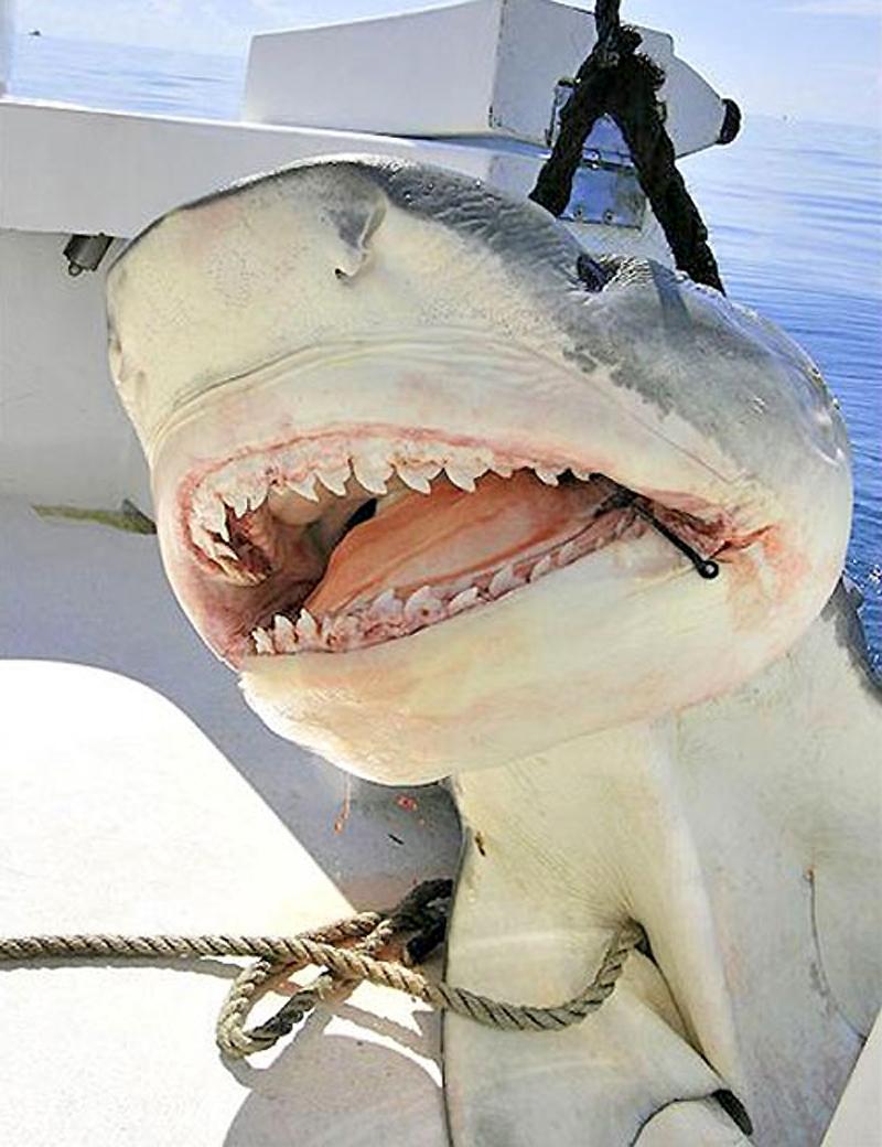 раджабова ловля акулы картинки дом твой
