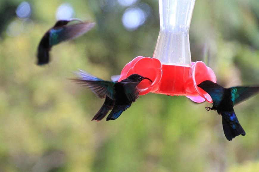 Главная достопримечательность сада Балата - колибри.