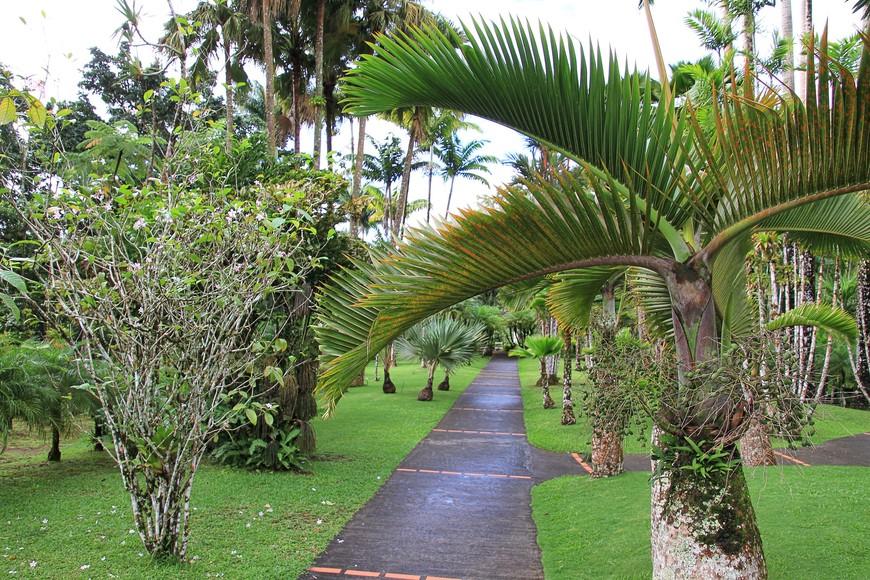 Гулять по саду просто - везде есть тропинки, которые сами доведут до всех симпатичных уголков.