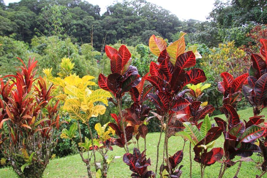 Мы попали на остров после дождя, и вся растительность сияла свежеумытая и блестящая.
