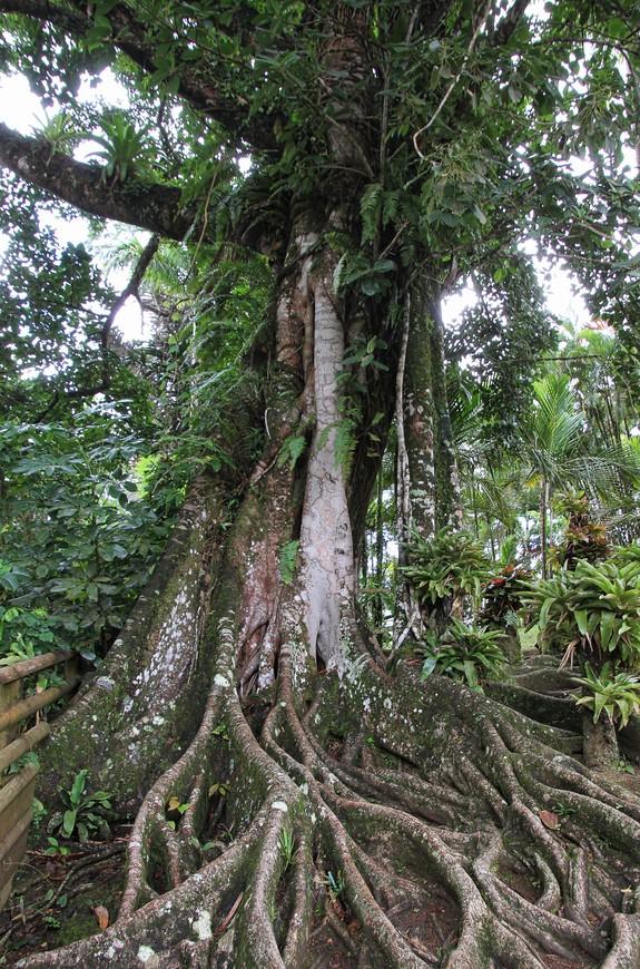 Влажность украсила деревья мхом, придавая всему таинственность.