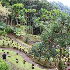 Мартиника. Ботанический сад