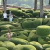 Сады замков Дордони