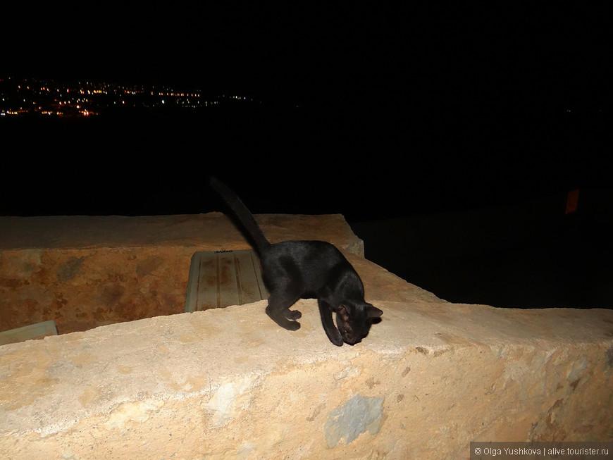Эта маленькая чёрная кошка была нашим проводником по крепости... )))