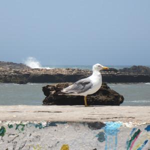Эсауира: ветреная, свободная, морская