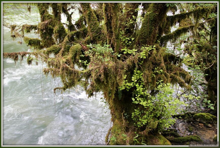 На берегу волшебной бурной речки растет сказочный лес.