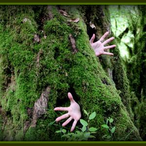 Лес Бабы Яги.