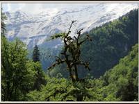 Рицинский реликтовый национальный парк.
