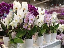 В Китае открылась масштабная выставка орхидей
