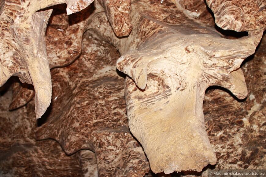 Стены пещерных галерей покрыты гипсом разнообразных цветов и форм. Некоторые напоминают силуэты животных, как, например, здесь - голова быка.