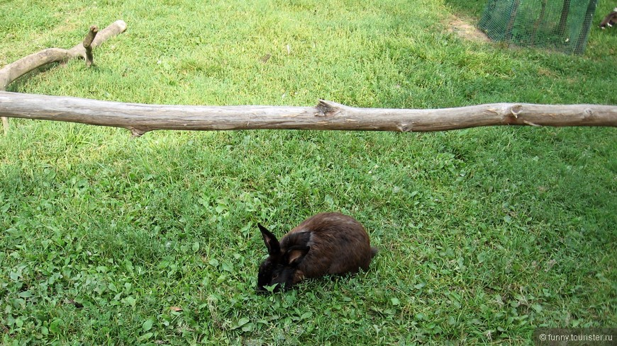 Кролики на территории экопарка бегают и прыгают повсюду.