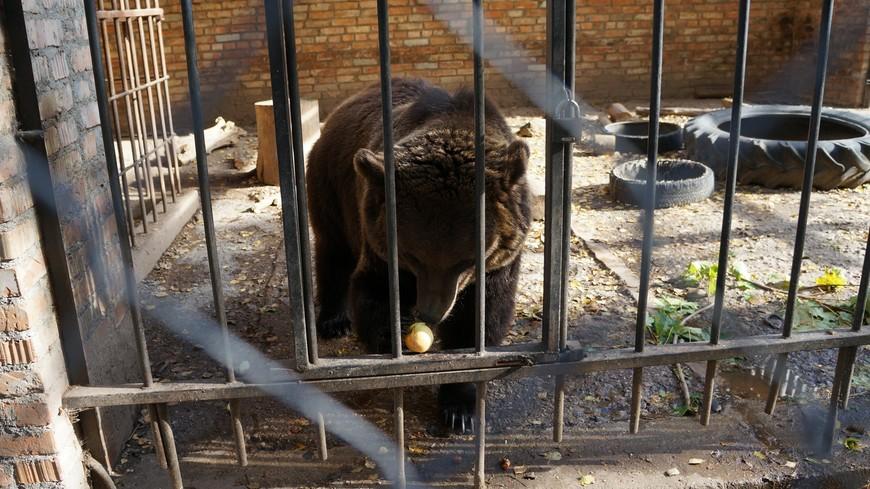 Медведица Василиса очень любит яблоки.Мы когда ездим всегда с собой целый пакет берём.