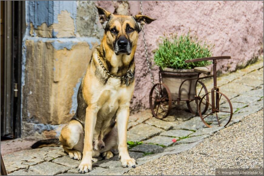 портрет собаки с велосипедом или натьрморт велосипеда с собакой
