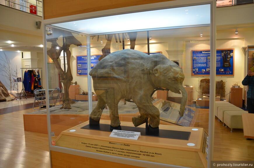 Мамонтенок Люба в музейном комплексе им.Шимановского. Пожалуй самый известный мамонт нашей страны.