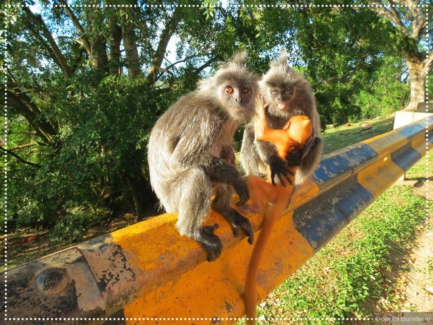 Отец сыну, показывая фотку:   --- А это мы с твоей мамой в обезьяньем питомнике.  Мать: --- Сколько раз говорила, нет меня на этой фотографии...