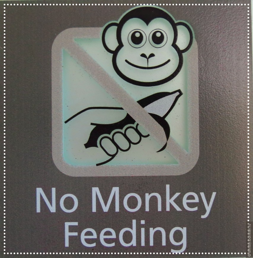 В отеле на стене висит надпись: --- Обезьян не кормить.