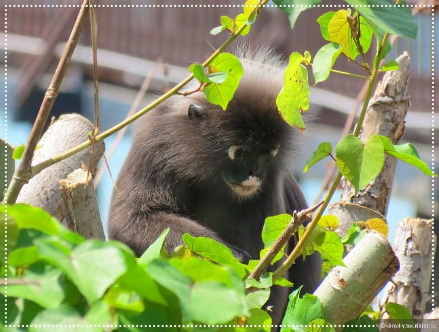 Не ори матом – станешь приматом!