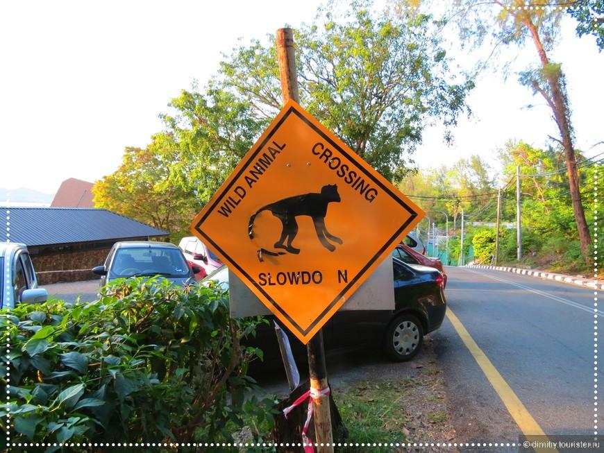 А эта фотография к моей коллекции дорожных знаков. Перебегающих дорогу обезьян в ней еще не было.
