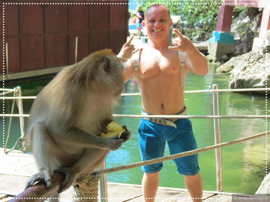 """Мысли оппонента: """"Ну и кто после этого из нас обезьяна?"""""""