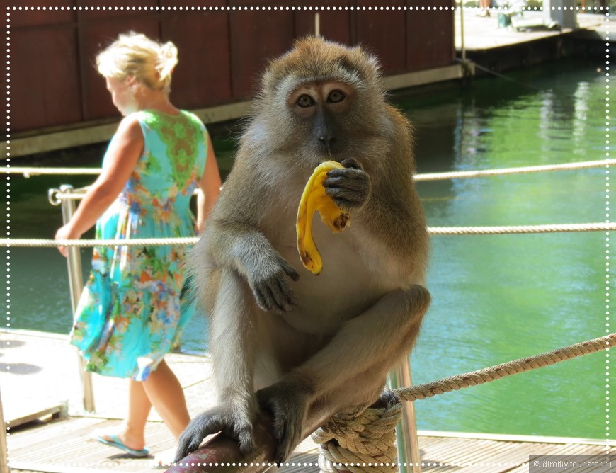 Палку от лени взяла обезьяна - не захотелось ей лезть за бананом.