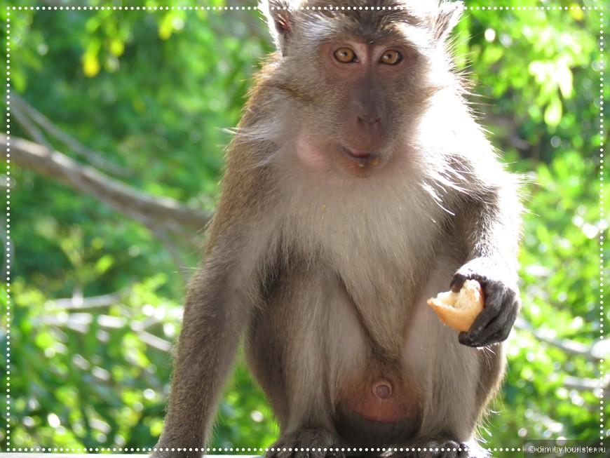 """В Индии обезьяны собирают кокосы. А мои макаки будут в сибирской тайге собирать кедровые орехи, лущить их, складывать в ящики…  — Наклеивать ярлыки…  — Ну нет, наклеивать ярлыки – это мы обезьянам не отдадим. Цитата из фильма """"Гараж""""."""