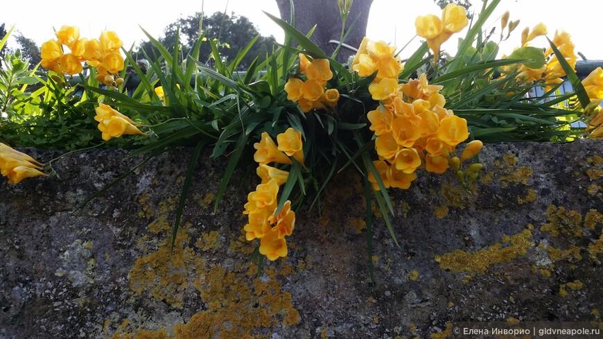 Цветущий Каприйский февраль